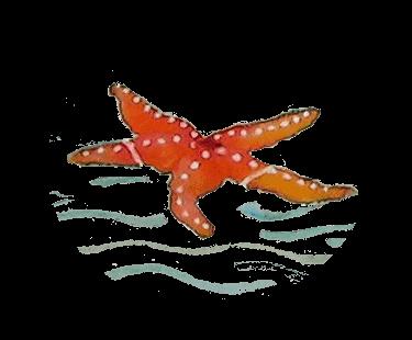 Susurro de estrella